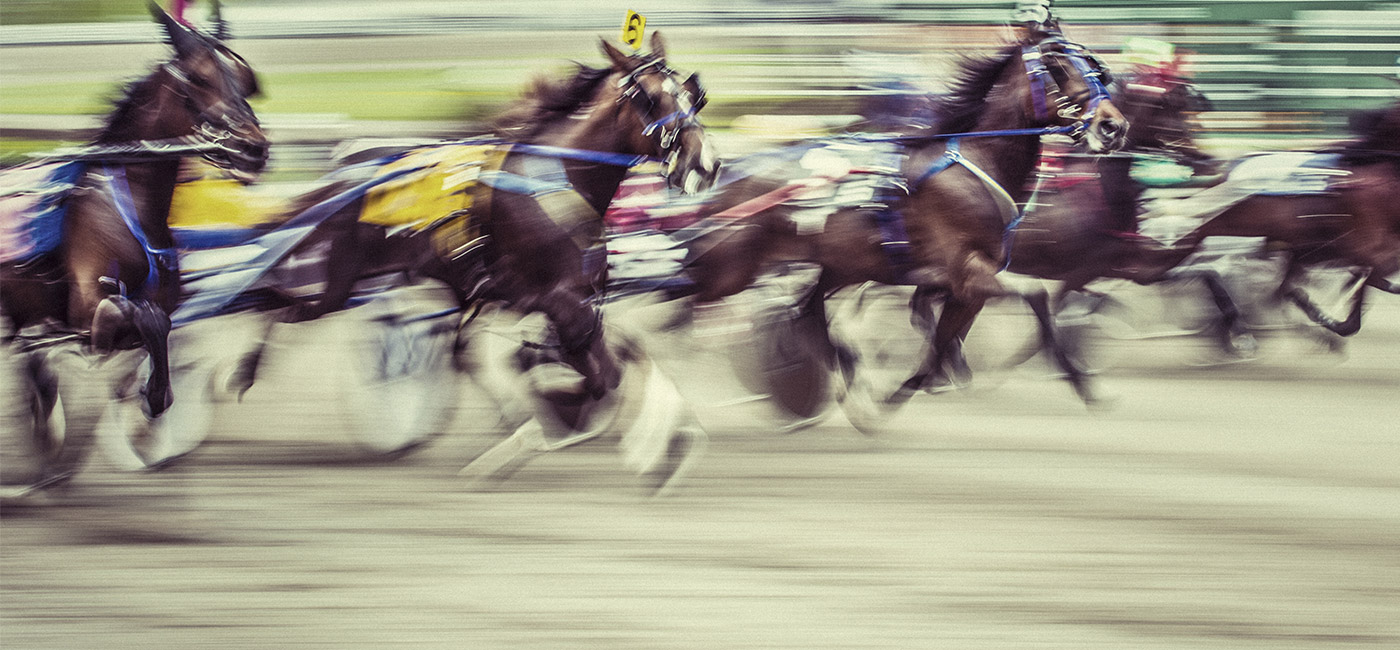 [Header] [About us] [Awards] Racehorses